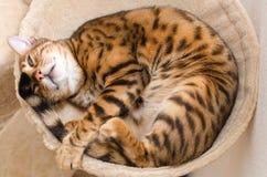 Comfortabele slaapkat Royalty-vrije Stock Afbeeldingen