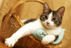 Comfortable Cat in a Basket Royalty Free Stock Photography