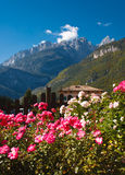 Cottage house in the mountains. Comfortable cottage house in the background of mountains. There are beautiful pink flowers in the foreground. There are peaks of Stock Photos