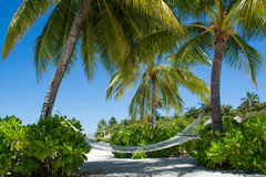 Comfortable cozy hammock between palm trees at the tropical island. Comfortable  cozy hammock between palm trees at the tropical island at Maldives Royalty Free Stock Photography