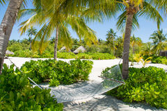 Comfortable hammock between palm trees at the tropical island Stock Photography
