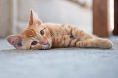 Comfortable kitten on the carpet Stock Photo