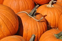 Comfortable Pumpkins Royalty Free Stock Image