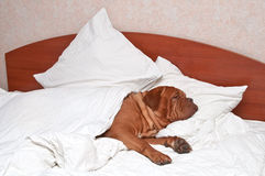 Comfortable Sleeping Royalty Free Stock Photography