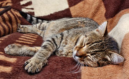 Comfortably sleeping cat Stock Photos