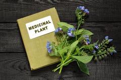 Comfrey лекарственного растения и лекарственное растение каталога стоковое изображение rf