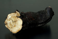 Comfrey; Błonie; leczniczy, korzenie Obrazy Royalty Free