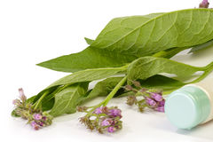 Comfrey_Cream Royalty Free Stock Image