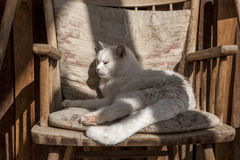 Comfy cat in chair. Stock Image