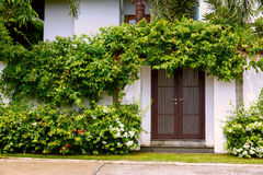 Comfy cottage with curly plant on walls Stock Image