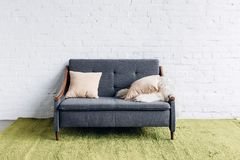 Comfy couch in modern living room with white brick wall. Mockup concept Stock Photography