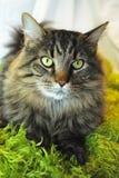 Comfy Kitty Stock Photos