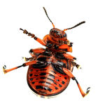 Comic colorado beetle. On the isolated background Royalty Free Stock Photo