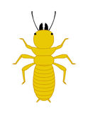 Comic Termite Insect. Vector Illustration Stock Photo