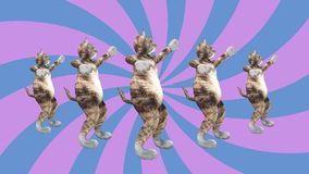 Comic pussycats waving paws and tail in an energetic dancing clip summer mood