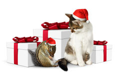 Comic xmas pet, funny tired squirrel and cat with santa hat Royalty Free Stock Photography