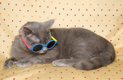 Comical cat with sunglasses. On the sofa Royalty Free Stock Photography