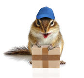Comical chipmunk courier hold parcel royalty free stock image
