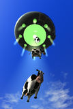 Comical Cow Abduction 3. Comical looking cows are abducted by a flying saucer vector illustration
