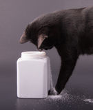 Comical image of a black cat spilling sugar out of a white jar. On dark gray background Royalty Free Stock Photo