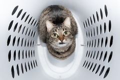 Comical image of a brown tabby cat sitting in a laundry hamper royalty free stock photos