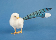 Comical image of a tiny Easter chick Stock Photos
