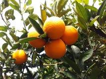 Comida anaranjada de la fruta imágenes de archivo libres de regalías