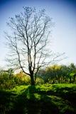 Comida campestre bajo árbol Fotografía de archivo