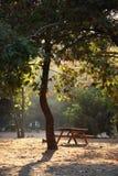 Comida campestre bajo un árbol grande Imagenes de archivo