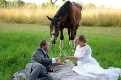 Comida campestre con el caballo Fotografía de archivo
