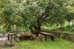 Comida campestre de Cerdeña debajo del árbol imagen de archivo libre de regalías