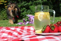 Comida campestre de la limonada y del perro Foto de archivo libre de regalías