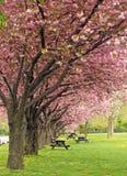 Comida campestre de la primavera Imagen de archivo libre de regalías