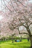 Comida campestre debajo de Cherry Blossom Foto de archivo libre de regalías