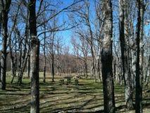 comida campestre entre árboles Imagenes de archivo