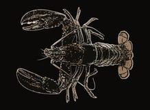 Comida crustácea del océano del mar de los pescados de la langosta Imagenes de archivo