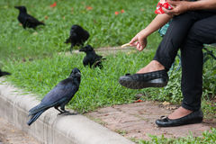 Comida de alimentación al pájaro negro Fotos de archivo