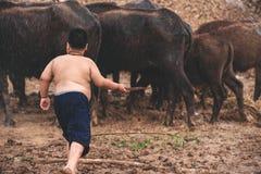 Comida de alimentación de la vaca de la manada del granjero del muchacho al aire libre Poco el jugar del granjero imágenes de archivo libres de regalías