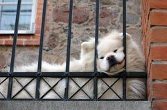 Comida de comida do cão Fotografia de Stock Royalty Free
