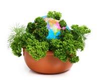 Comida de Eco. Globo e hierbas. Imagen de archivo libre de regalías