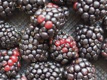comida de la fruta de la zarzamora foto de archivo