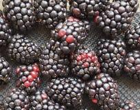 comida de la fruta de la zarzamora foto de archivo libre de regalías