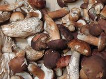 Comida de la seta de la seta de Porcini Imagen de archivo libre de regalías