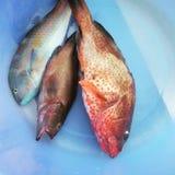Comida de la vida de la isla de los pescados frescos Imágenes de archivo libres de regalías