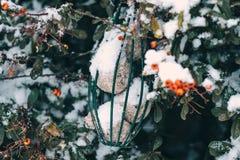 Comida de pájaro en una red del metal dentro de un arbusto en invierno Imagen de archivo libre de regalías