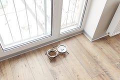 Comida de perro en cuenco en piso de madera cerca de la ventana Imagenes de archivo