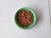 Comida de perro en una taza de verde Fotografía de archivo libre de regalías