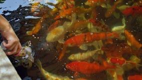 Comida de pescados de alimentación de la pequeña mano de una botella de leche metrajes