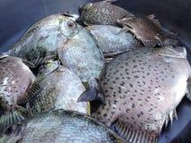 Comida de pescados preparada Fotografía de archivo