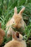 Comida del conejito imagen de archivo libre de regalías